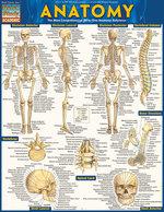 QS Anatomy