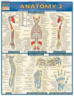 QS Anatomy 2
